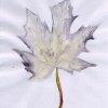 pict_09-10-2005-ahorn_ii